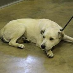 Pictures of Clover a Mixed Breed (Medium) for adoption in Cleveland, AL who needs a loving home.