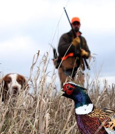 Pheasants Forever: getting started