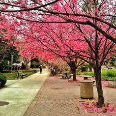 Hofstra University in the spring<3