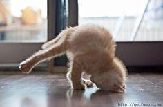 kitty yoga...