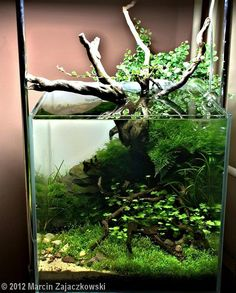 2012 AGA Aquascaping Contest - Entry #72