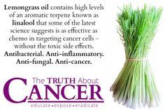 TTAC - Lemongrass Graphic