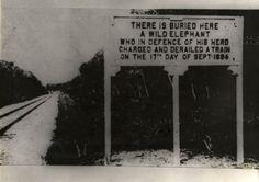 1894:  Commemorative sign for a fearless elephant, Telok Anson, Perak, Malaysia