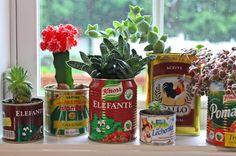 Simply adorable little succulents