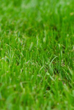 Het gras altijd groener bij de buren?