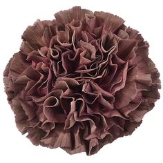 Trending: Carnations - Perfect for your DIY Wedding Flowers — Bloom Culture Flowers Carnation Colors, Purple Carnations, Flower Colors, Chocolate Cosmos, Chocolate Flowers, Wholesale Florist, Flowers Wholesale, Brown Flowers, Blush Flowers