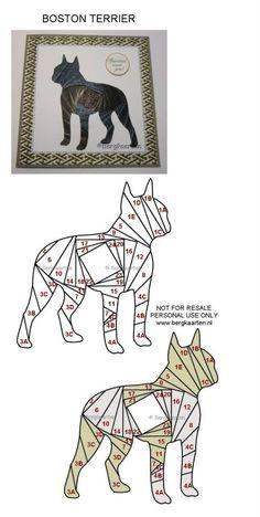 Irisvouwen: Boston Terrier