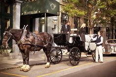 A Charleston tradition - the horse and carriage tour