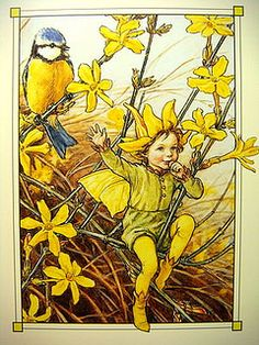The Winter Jasmine Fairy ~ Cicely Mary Barker.