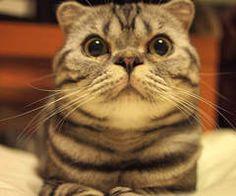 貓的~你知道 2012 世界上最引人注意的貓咪是...