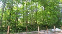 Bosque en el lado sur del alojamientos