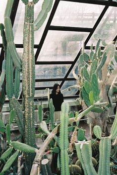 a cacti greenhouse in the city