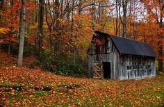 Autumn Country Barn (by Nature Pictures by ForestWander)
