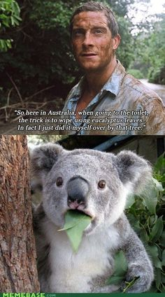 """""""So here in Australia, when going to the toilet, the trick is to wipe using eucalyptus leaves. In fact I just did it myself over by that tree."""" (You Mean That Wasn't Vegemite?) Uh oh..poor koala. Lol"""