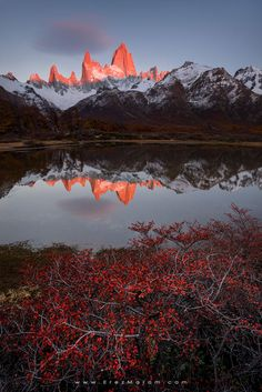 """Autumn Glow, Vol. 1 - Spectacular morning glow strikes Mount Fitz Roy, reflected in a small lake near Poincenot Camp. The small bushes around assume a bright red color this time of year. If you'd like to experience and shoot this amazing location, check out my  '<a href=""""http://www.erezmarom.com/index.php/photography-workshops/view/giants-of-the-andes-patagonia-photo-workshop"""">Giants of the Andes</a>' Patagonia photo workshop and  <a…"""