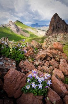 Colorado Columbines Uncompaghre Wilderness Amazing discounts - up to 80% off Compare prices on 100's of Travel booking sites at once Multicityworldtravel.com