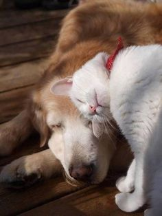 love forever…reminds me of my Magpie (dog) and Ninja (cat) they are always doing this, so loving to each other, makes my heart sing!