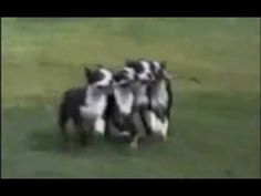 Funny Dogs Video Clips - Part 1
