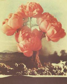 Atomic Roses