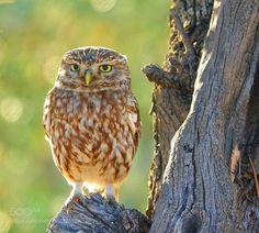 Untitled (Fede Grande / Madrid / Spain) #DSC-RX10M3 #animals #photo #nature