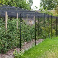 Superior Polymer Fruit Cage - Agriframes