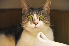 Meet beautiful Bellona! This regal girl is sweet, curious and attentive. She can be a bit shy at first, but with time and patience she quickly warms up to friendly faces.