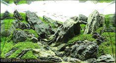 Nano Aquascape - Unconditional Love - Jirawong Laopiyasakul Nano Aquascape - Unconditional Love - Jirawong Laopiyasakul nano-aquascape Aquajaya
