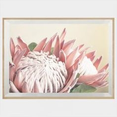 Artworks - Buy Art Online for a Great Home Transformation Protea Art, Protea Flower, Flowers, Canvas Art Prints, Framed Art Prints, Blue Flower Wallpaper, King Protea, Buy Art Online, Cool Artwork