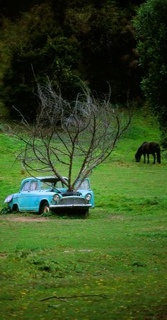 In NZ rare french Simca Aronde (made in Australia ) Abandoned Cars, Abandoned Buildings, Abandoned Places, Abandoned Vehicles, Growing Tree, Photomontage, Tree Art, Mother Nature, Cool Photos