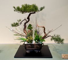 Ikebana Ohara in a round alcove with orchids and pine branch