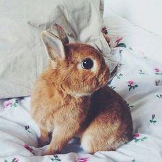 Conejo cafe sobre una cama con flores, muy lindo.