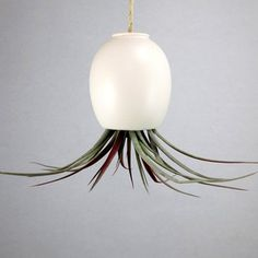 Air Plant Pod Small Matte White, $21, now featured on Fab.
