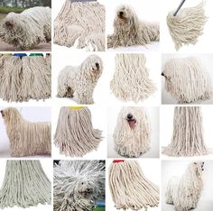 Dog or mop? Miss Zack does not just compare animals to food - she also made this montage of dogs that look identical to mops Cat Memes, Funny Memes, Jokes, Funny Dogs, Gato Animal, Funny Animals, Cute Animals, Komondor, Tastefully Offensive