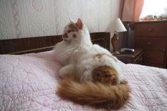 Mes chats n'ont pas été traumatisés par les travaux dans mon atelier , comme vous pouvez le voir avec Lilou dans ma chambre