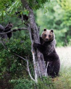 9 Dicembre 2020 - Alessandro Picchio - TOP SELECTION Brown Bear, Canon, Club, Top, Animals, Italia, Animales, Cannon, Animaux