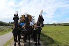 Decorated horses in front of a covered wagon during a wedding on the island Terschelling, The Netherlands