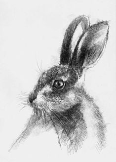 Hare again, Artist Sean Briggs producing a sketch a day, prints available at https://www.etsy.com/uk/shop/SketchyLife #art #drawing #hare #http://etsy.me/1rARc0J