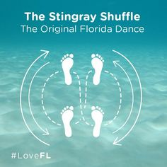 Do the stingray shuffle from May to October to avoid being stung by a stingray when entering water at the beach. The Original Florida Dance #LoveFL