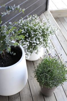 Stylizimo Outdoors – on our stairs right now Outdoor Pots, Outdoor Gardens, Outdoor Living, Balcony Garden, Garden Pots, Garden Bar, Rooftop Garden, Easy Garden, Plantation