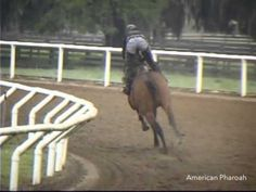 American Pharoah - Incredible! Pay close attention starting at the 0:45 second mark... like a rocket!
