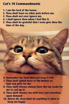 Katzen Source by ggaertner_ist videos wallpaper cat cat memes cat videos cat memes cat quotes cats cats pictures cats videos Cat Jokes, Funny Cat Memes, Funny Cats, Cats Humor, Funniest Memes, Funny Animal Pictures, Cute Funny Animals, Cute Cats, Animal Pics