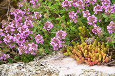 4 liečivky, ktoré by ste počas júla nemali prehliadnuť | Záhrada.sk Plants, Flora, Plant, Planting