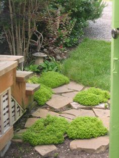 A verdant entry. Humble Abode, Stepping Stones, Seaside, Outdoor Decor, Home Decor, Stair Risers, Decoration Home, Room Decor, Beach
