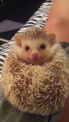Take a deep breath and look at this hedgie, smiling at you through the pain.