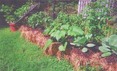 "Knowing that Charlotte Nelson was a ""garden nut,"" one of the clients of her small business suggested this method to her, after discovering i. Veg Garden, Lawn And Garden, Vegetable Gardening, Strawbale Gardening, Straw Bales, Small Space Gardening, Organic Gardening, Charlotte, Yard"