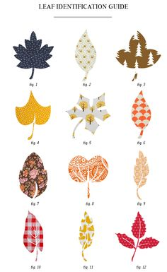 Leaf patterns from decals, wallpapers, textiles