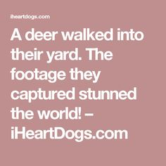 A deer walked into their yard. The footage they captured stunned the world! – iHeartDogs.com