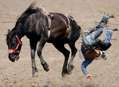 Google Image Result for http://npac.ca/wp-content/uploads/2009/10/Rodeo.jpg