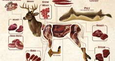Check Out This Illustrated Deer Meat Guide - With recipe links