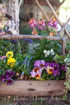 Pansies in a rustic toolbox Blomsterverkstad My Flower, Flower Pots, Beautiful Gardens, Beautiful Flowers, Fall Containers, Deco Floral, Garden Pots, Garden Cottage, Pansies